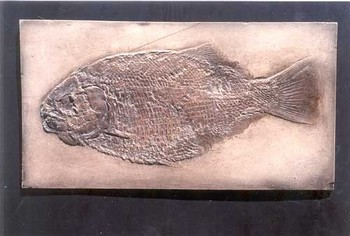 Dapedius Punctatus Fish Cast Plaque