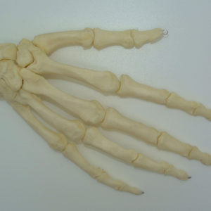 human hand articulated replica