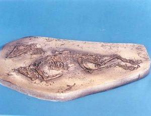 Jurassic Cretaceous Bird Panel