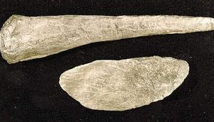 Stegosaurus Dinosaur Tail Spike and Spine Plate Fossils Replicas Models
