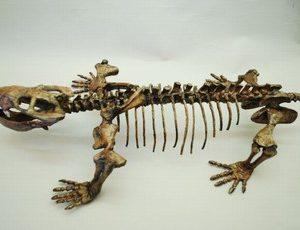Dicynodontian Skeleton Mounted Replica