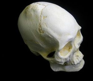 Mongoloid 633P Male Skull Model Replica