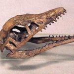 kbyoj-EwxbN-nYDtI-Archaeopteryx_dinosaur_skull_Model