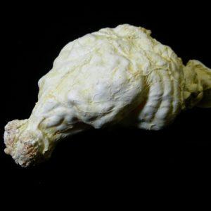 kodiak bear brain replica