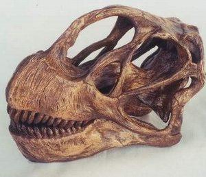 Camarasaurus Lentis Dinosaur Skull Fossil Replica