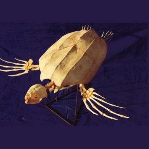 leatherback turtle skeleton replica