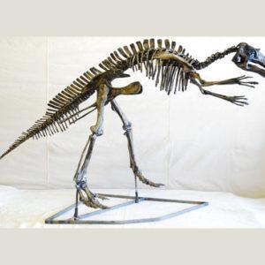 maiasaura juvenile skeleton replica