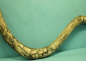 woolly Mammoth Tusk Replica