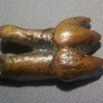 manatee_tooth_replica_museum_quality-BCbYT-PVsXF-gWwIF