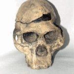 Mrs. Ples STS 5 Skull
