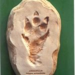 nIruB-tdRNT-WTqgY-Armadillo_Footprint_Cast_Replica_Models