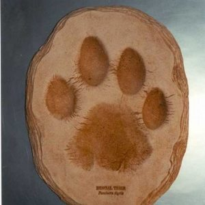 Bengal Tiger Footprint Cast Replica Model