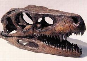 Herrerasaurus Dinosaur Skulls Replicas Models