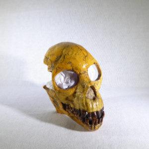proconsul skull replica