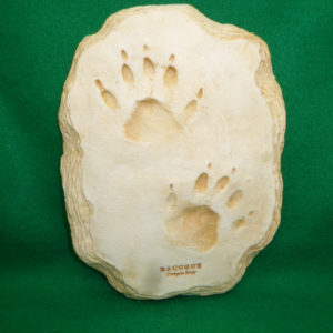 raccoon footprint cast replica