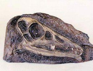 Eudimorphodon Skull Plaques