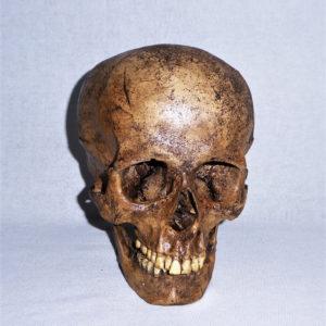 sw amerind skull replica