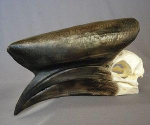 Black Cascaqued Male Hornbill Skulls Replicas Models