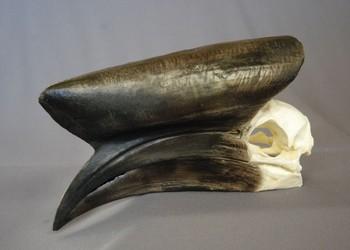 Black Cascaqued Male Hornbill Skulls Replicas Models