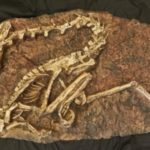 velociraptor_skeleton_plaque_P350-edBFX-EMHGO-hNQSN