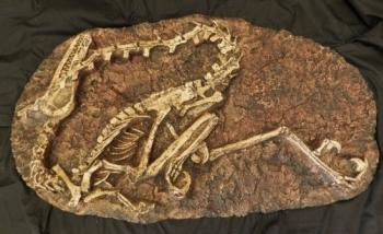 Velociraptor osmolkae Skeleton