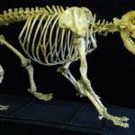 vhKRc-qNtjF-hyScM-Cave_bear_complete_skeleton_replica_model