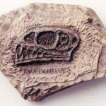 Anurognathus Plaques