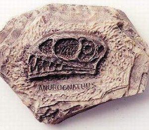 Anurognathus Doderlein Skull Plaque
