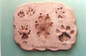 North American Mammal Predators Footprint Assortment