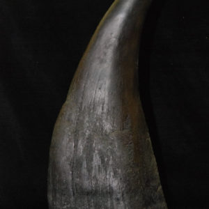 white rhinocerous horn replica