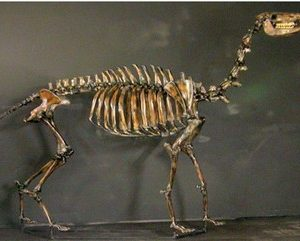 Yesterdays Camel Skeleton