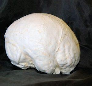 Human Modern Man Brain Cast Model Replica