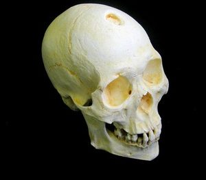 Mongoloid 634P Male Skull Model Replica