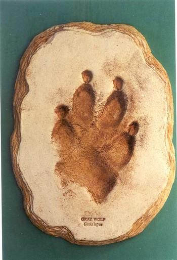 Gray Wolf Footprint Cast Replica Models