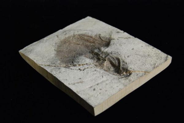 California Dinosaur Footprint Plaque