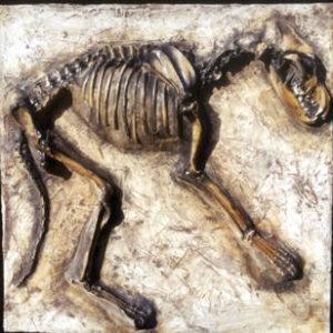 Dire-wolf-skeleton-panel-L109APANEL