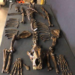 La Brea Tar Pits Replicas For Sale | Skeletons and Skulls ...