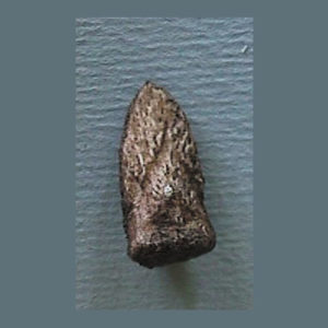 eryops megacephalus claw