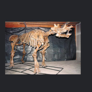 uintatherium mounted skeleton replica