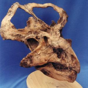 protoceratops dinosaur skull replica